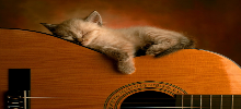 والپیپر هنری گربه